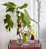 Vases Figues Emaillé sur Cristallin